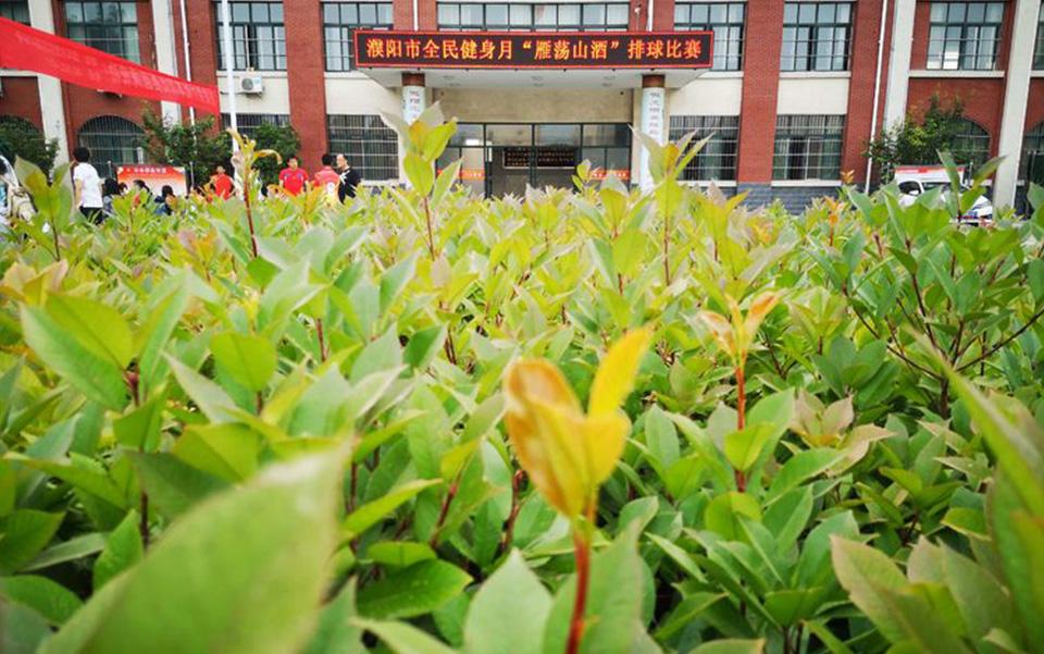 """濮阳市全民健身月""""BETVICTOR酒""""排球比赛圆满落下帷幕"""